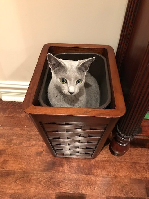 cat-box-soup