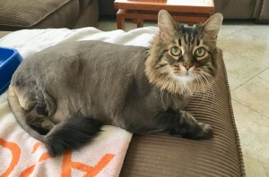 soup-cat-shaved