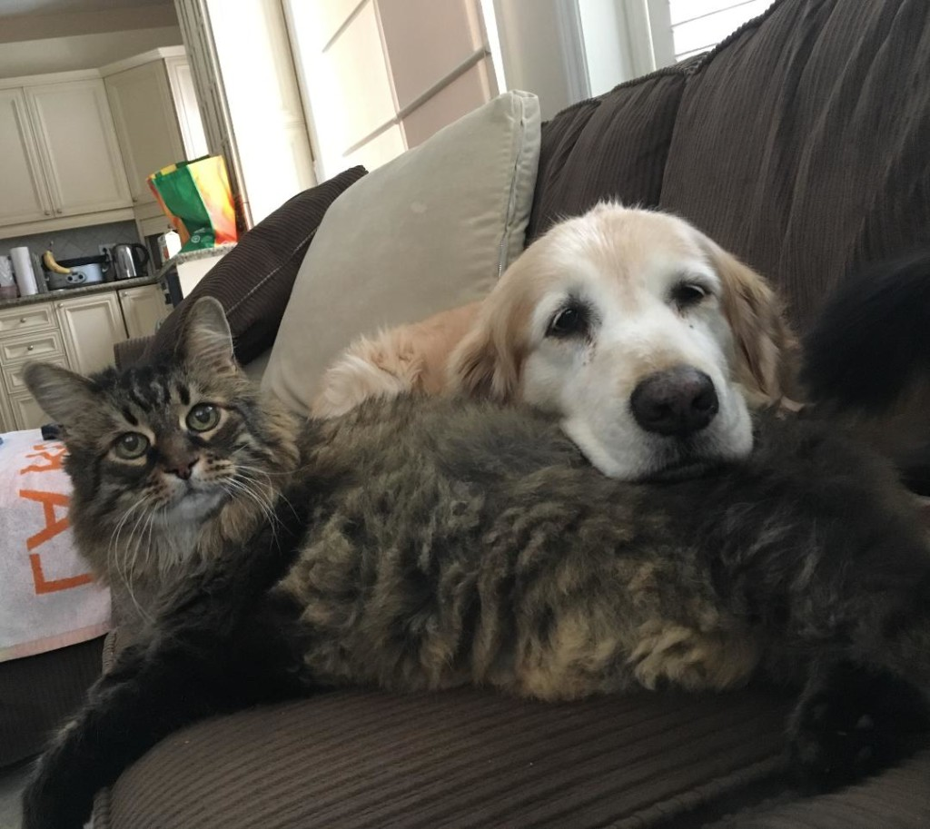 cat-dog-buddies
